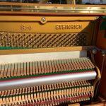 steinrich-s20